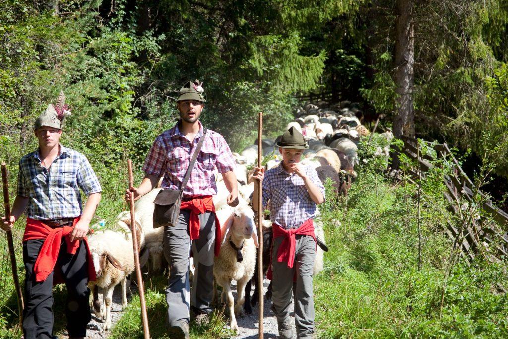 Schafschoad in Nassereith